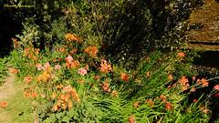 Jardins botaniques de Kerdalo (claude 22) Tags: jardin kerdalo jaudy bretagne breizh garden flowers plantes botanique nature tredarzec brittany plants botanical paysage landscape verdure vert green tréguier cotesarmor 22220 paimpol trédarzec jardins claude22