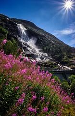Langfossen, Norway (Vest der ute) Tags: xt20 norway etne waterfall flowers mountain sunstar bluesky summer trees cloud fav25 fav200