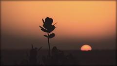 Lunes... (Sebas Fonseca) Tags: bokeh travelling orange backlight sunset sun india jaisalmer