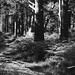 Black Woods of Rannoch 6