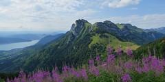 Lac d'Annecy, Lanfonnet et épilobes (ViveLaMontagne67) Tags: france alpes alpen alps savoie savoy tournette annecy lanfonnet lac alpages pâturages bornes nuageux fleurs flowers clouds pastures lake mountain landscape sky verdoyant 500v20f