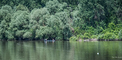 2018 - Serbia - Danube - Fisher People (Ted's photos - For Me & You) Tags: 2018 cropped nikon nikond750 nikonfx serbia tedmcgrath tedsphotos vignetting boat reflection waterreflection trees arbor danuberiver danube river water wideangle widescreen fishing fisher greenery riverbank