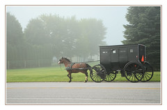 In a Hurry in Amish Country - Middlebury, Indiana (sjb4photos) Tags: indiana middleburyindiana amishbuggy alltypesoftransport