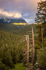 Inspiration Point, Glacier NP (optimalfocusphotography) Tags: trees summer landscape mountrainier nature mist sunrise sky fog nationalpark washington usa clouds
