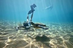 IMG_0066A (Aaron Lynton) Tags: snorkel snorkeling maui hawaii best amazing underwater ocean pacific turtle honu diving fun summer refraction clarity clear water overunder split view spl