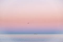 Morning Colors (NathalieSt) Tags: europe france hérault lagrandemotte languedocroussillon occitanie fuji fujifilm leverdesoleil nature sunrise xt20