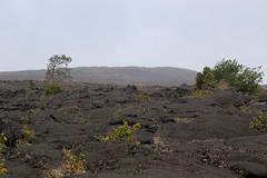 Mauna Ulu One Year Later (Ken S Three) Tags: volcano volcanoesnationalpark hvnp hawaii nature landscape lava maunaulu