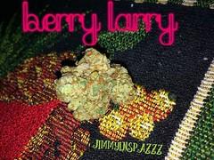 berry larry by jimmyinspazzz (jimmyinspazzz) Tags: cannabis cannabisphotography cannabisphilomath cannabiscommunity indica dominant indicadominant ganja sensimilla jimmyinspazzz photography flower bud weed medicine recreational potography budshots