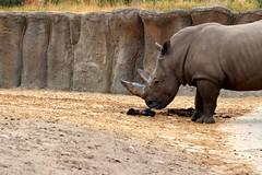IMG_0794 (Bob_lewerissa) Tags: wildlands emmen zoo canon 80d 70200 l nonis usm