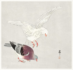 Two pigeons (1877-1945) by Ohara Koson  (1877-1945). Original from the Rijks Museum. Digitally enhanced by rawpixel. (Free Public Domain Illustrations by rawpixel) Tags: chim animal antique art asian bird drawing illustration japan japanese koson name ohara oharakoson old paint pigeons vintage