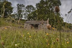 An abandoned barn (Explore 31/07/18 #15) (andyrousephotography) Tags: malhamtrail malham janetsfoss meadow flowers grass barn outbuilding trees walnutgrove