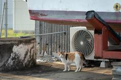 猫 (fumi*23) Tags: ilce7rm3 sony 85mm fe85mmf18 sel85f18 gato katze cat chat feline animal harbor port neko emount a7r3 ソニー ねこ 猫 三毛猫