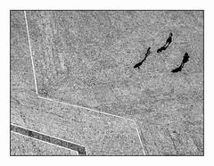 Géométrie. (francis_bellin) Tags: vacances aout été blackandwhite monochrome noiretblanc street graphique géométrie rue avignon photoderue streetphoto 2018 palaisdespapes