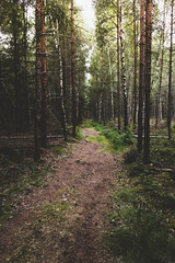(Benedikt VII) Tags: wald wood schweden sweden baum bäume tree trees sonyalphaa7 2870mm sel2870 licht forest weg trail natur nature pfad vollformat fullframe
