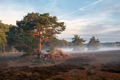 Heideblüte 2018 (elseyjetter) Tags: heide heidelandschaft nrw haltern westruper nebel nebelstimmung nature trees mist vertrocknet morgenstimmung