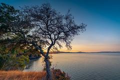Tree and Sunset (Thanks for 1.3 million views) Tags: sanpablo bay marin california tree sunset