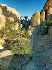Jumbo Rocks- Joshua Tree National Park- Riverside County CA  (8) (kevystew) Tags: california riversidecounty joshuatree nationalpark jumborocks