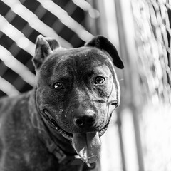 Happy04Aug201864-Edit.jpg (fredstrobel) Tags: dogs pawsatanta phototype atlanta blackandwhite usa animals ga pets places pawsdogs decatur georgia unitedstates us