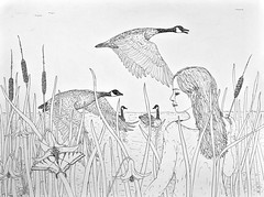 TheNaturalistTouchedUp (Alex Hiam) Tags: final canada geese pen ink landscape drawing sketch pond lake rushes cattails lily lilies girl portrait profile sky birds flight nature summer butterfly swallowtail tiger illustration hiam