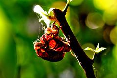 流光溢彩 5 (廖醫師個人影集) Tags: insect light greencolor
