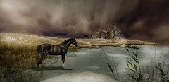 (sinvictta) Tags: sl clouds sky sand house field country beach landscape virtual horse secondlife