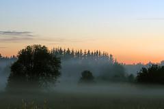 Udu (Jaan Keinaste) Tags: pentax k3 pentaxk3 eesti estonia loodus nature maastik landscape udu mist