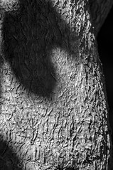 Surface (James Etchells) Tags: macro infrared ir black white monochrome photography portrait shape structure surface texture nature natural world tree bark patterns pattern nikon sigma experiment