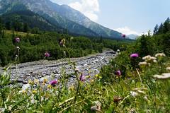 20180709-70-Alpine meadow (Roger T Wong) Tags: 2018 alps europe montblanc rogertwong sel2470z sony2470 sonya7iii sonyalpha7iii sonyfe2470mmf4zaosscarlzeissvariotessart sonyilce7m3 switzerland tmb tourdumontblanc bushwalk hike outdoors river summer tramp trek walk