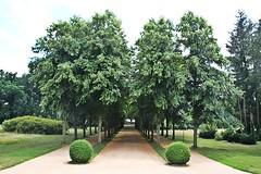 Avenue (just.Luc) Tags: trees bomen arbres bäume parc park potsdam brandenburg allemagne deutschland duitsland germany green groen vert grün patrimoinemondial werelderfgoed worldheritagesite unescowelterbe
