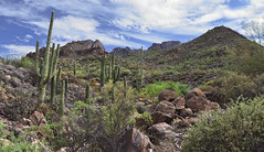 Sonoran Desert View (BongoInc) Tags: arizona apachetrail sonorandesert landscape