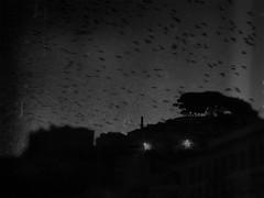 Vol de nuit (P. Correia) Tags: lisboa 2015 lisbon birds graça lisbonne panasonicdmcfz18 pcorreia