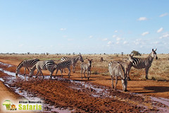 Africa Kenya Safari (africanmemorablesafaris) Tags: safari africasafari daytrips travel tour