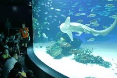 Wonderful Underwater World (seiji2012) Tags: 東京 池袋 サンシャインビルディング 水族館 aquarium shark ikebukuro tokyo