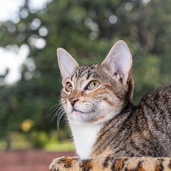 javacatscafe12Aug20180108.jpg (fredstrobel) Tags: javacafecats javacatscafe atlanta places animals ga pets cats usa georgia unitedstates us