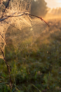 Web. Сеть. #своифото, #пейзаж, #природа, #утро, #рассвет, #дерево, #натура, #восход, #sunrise, #nature, #tree, #Landscape, #sun, #туман, #лучи, #foggy, #паутина, #сеть, #net, #web