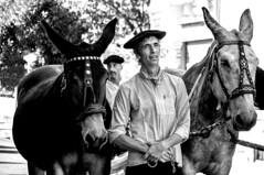 Autrefois le Couserans (Ariège) (PierreG_09) Tags: ariège pyrénées pirineos couserans fête manifestation tradition saintgirons autrefoislecouserans portrait bw nb noiretblanc mule mulet attelage homme béret