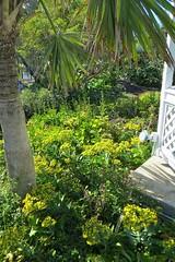 Key West (Florida) Trip 2017 7610Rif 4x6 (edgarandron - Busy!) Tags: florida keys floridakeys keywest keywestgardenclub westmartellotower plants