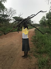 Woman fetches fuelwood near Zoka Central Forest Reserve (FAO Forestry) Tags: fao un uganda refugees unhcr world bank environment energy south sudan woodfuel forestry