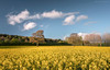 Springfield (Sarah_Brooks) Tags: spring springfield landscape somerset yellow flowers blooms sky clouds april