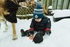 Snow Day (Katherine Ridgley) Tags: toronto snow winter weather outside outdoors family child kid baby toddler boy toddlerboy babyfashion toddlerfashion dog domesticdog workingdog torontodog purebred purebreed purebreddog germanshepherddog germanshepherd gsd alsatian alsatianwolfdog bergerallemand deutscherschaferhund deutscherschäferhund schäferhund schaferhund dsh shepherd