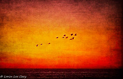 In Flight At Sunset 2 (lorinleecary) Tags: composite california oceansunset textured sunsets horizons digitalart cambria inflight artography bites birds centralcoastcalifornia waves