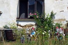 26.7.18 Chynov and camels 17 (donald judge) Tags: czechia south bohemia toulava chynov zahostice camels
