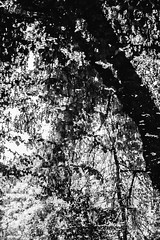 Serralves Reflections - 2 (annie.cure) Tags: reflection trees water waves texture monochrome mysterious mood blackandwhite blur effect serralves nature noise atmosphere abstract porto portugal canon 750d