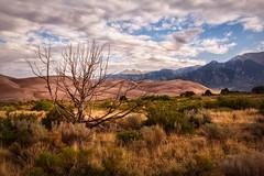 Stand Alone (Lukas Gordon) Tags: 2018 greatsanddunes grass sand landscape tree plants sunrise flowersplants brush sky outdoor portfolio mountain colorado clouds lukasgordon