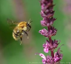 Ready for touch down ! (JoannaContrerasPhotography.) Tags: sigma105mmf28macro