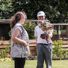 Indian eagle owl (JOHN BRACE) Tags: for 50th birthday clare lovely wife got me bird prey afternoon huxleys horsham here am with indian eagle owl bubo bengalensis a hrefhttpwwwflyingfalconscoukfalconshtml relnofollowwwwflyingfalconscoukfalconshtmla
