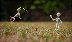 Nailed it (eyesore9) Tags: 52week fasteners nail skeleton dog jumping leaping catching poseskeleton rement