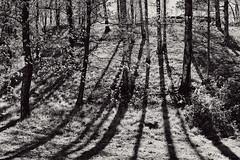Slope Shadows (pni) Tags: monochrome tree grass bush trunk branch mäntymäki tallbacka helsinki helsingfors finland suomi pekkanikrus skrubu pni park