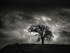 Tree on a Flat Top (StefanB) Tags: 2018 california cloud em5 geotag outdoor storm tree treescape winter 45200mm usa