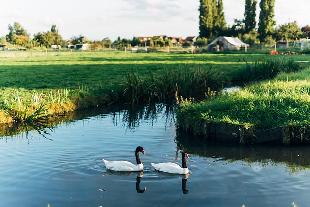 2017荷蘭自助旅行-1066